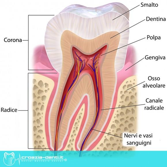 Dente, gengiva, parodonto, parodontologia
